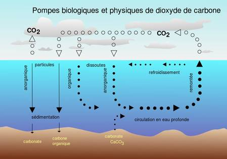 fluctuations rapides du climat et cycle du CO2